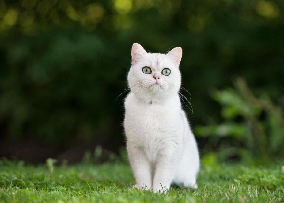 Mơ thấy con mèo trắng đánh số mấy? Là điềm báo gì?