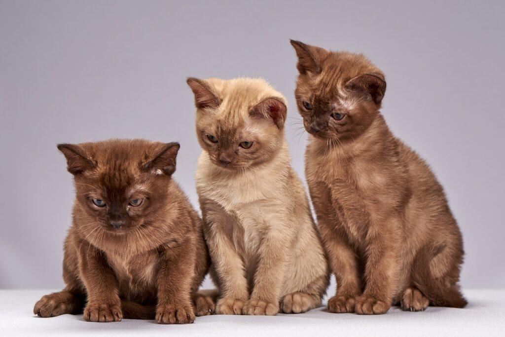 Nên đánh lô đề con gì khi mơ thấy những con mèo?
