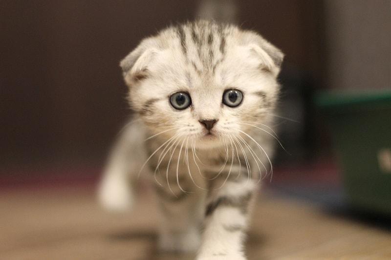 Mơ thấy con mèo mang thai đánh lô đề gì chắc chắn ăn tiền?