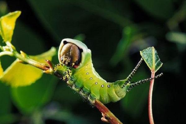 Nằm mơ thấy sâu bọ có điềm báo gì, đánh con số may mắn nào?